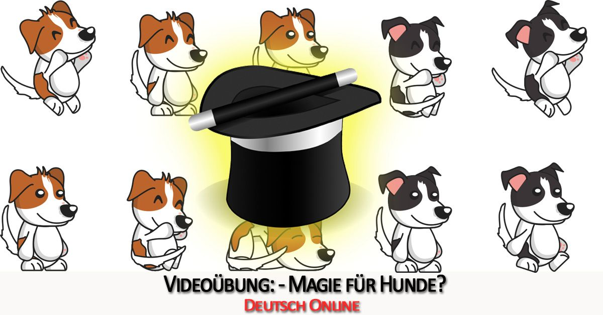 German with videos: The magician for dogs